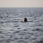 Spotkanie z fokami