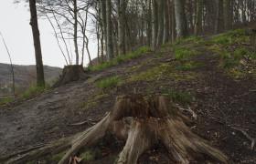 W górę leśnego wzgórza