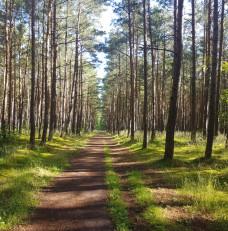 Droga lesna w Swibnie