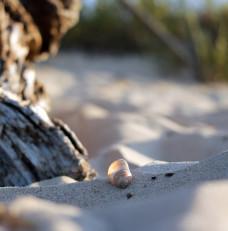 Skarby sobieszewskiej plaży
