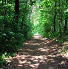 na leśnym szlaku