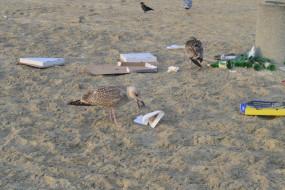 Mewy tonące w śmieciach