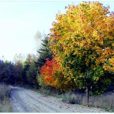 Złoto Jesieni