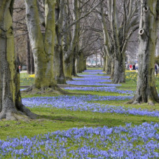niebieski dywan