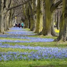 niebieski dywan/ Gdynia