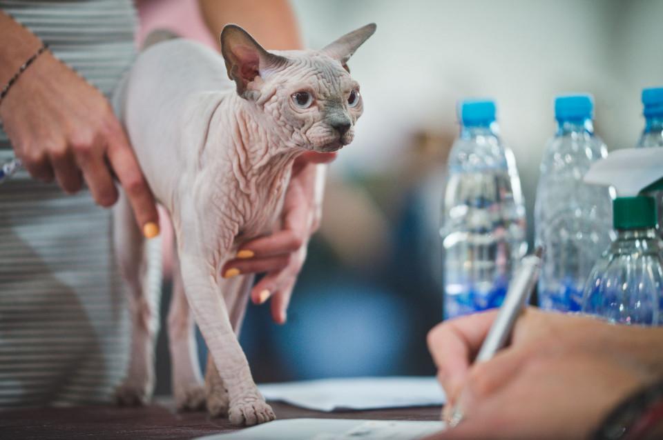 Ocena kotów
