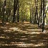 dolina samborowska w Oliwie
