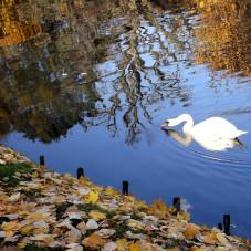 w Parku Oliwskim