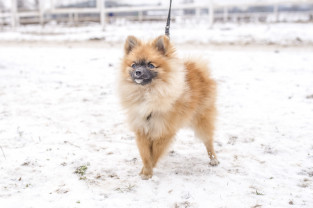 Targi dla miłośników zwierząt w Sopocie