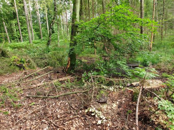 Wycinka drzew w okresie lęgowym ptaków