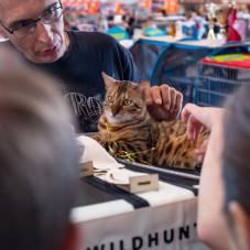 Jubileuszowa Wystawa Kotów Rasowych