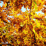 jesień / gdańsk