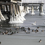 ptaki przy molo