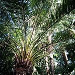 Palmiarnia w Parku Oliwskim