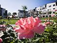 Patio Róży