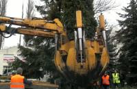 Przesadzanie drzew rosnących w rejonie sopockiego dworca