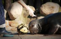 Po ratowaniu fok czas na morświny