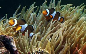 Ryby, które zmieniają płeć