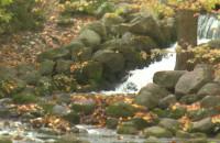 Jesienny spacer po Parku Oliwskim
