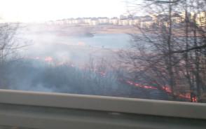 Płonące trawy na południu Gdańska