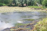 Tak wygląda staw na potoku Oliwskim