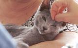 Najpiękniejsze koty można obejrzeć w Sopocie