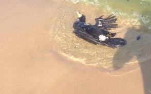 Zanieczyszczona plaża na Stogach