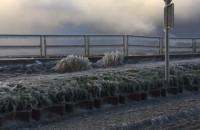 Nabrzeże w Rewie koło Gdyni