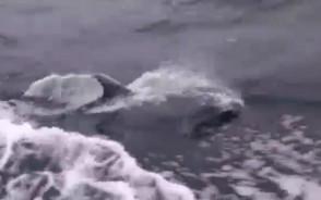 Delfin na Bałtyku