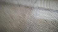 Pranie dywanów,czyszczenie wykładzin,czyszczenie i suszenie tapicerek, Trójmiasto i okol