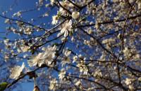 Piękna wiosna w Trójmieście