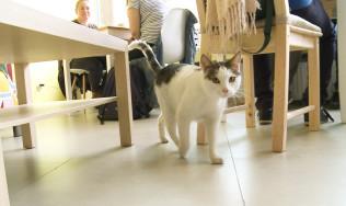 Kocia kawiarnia w Gdyni