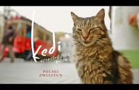 Kedi - sekretne życie kotów - zwiastun