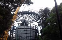Palma na wolności w Parku Oliwskim