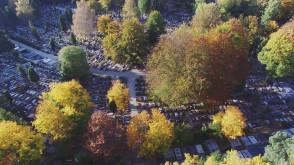 Jesień na cmentarzu i w lasach witomińskich