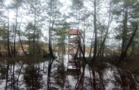 Mokradła w okolicach Czarliny