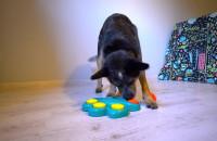 Psyjaciele - hotel dla psów w Gdynia