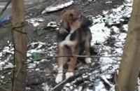 Adoptowany szczeniak przywiązany do drzewa