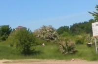 Ekologiczne koszenie trawy plus piękny widok