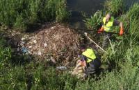 Sprzątanie gniazda łabędzi