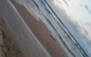 Martwa foka na plaży w Sopocie