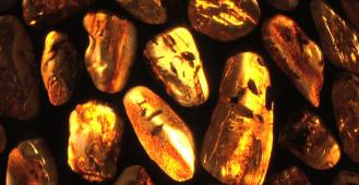 Amberif - 18. Międzynarodowe Targi Bursztynu, Biżuterii i Kamieni Jubilerskich