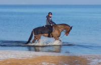 Koń na plaży w Sopocie