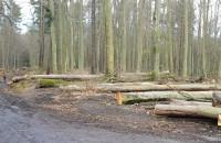 Wycięte drzewa