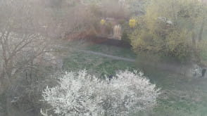 Codzienne łamanie gałęzi