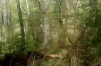 Rowerem Mevo w Rezerwacie przyrody Kacze Łęgi w Gdyni