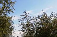 Nad Przeróbka latają dwa śmigłowce, ...