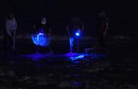 Poławiacze bursztynu w Jelitkowie