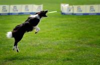 Latające psy w Sopocie