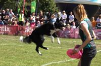 Latające psy w Gdyni